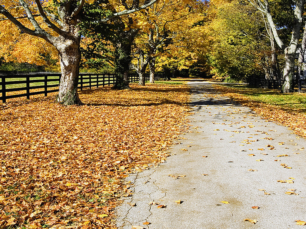 Beautiful Kentucky Autumn Wallpapers