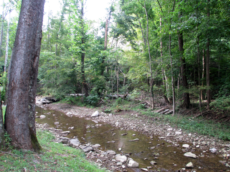 Creek at Carter Caves State Resort Park