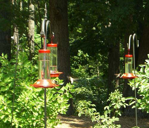 How To Attract Hummingbirds To Your Yard