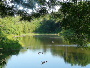 John James Audubon State Park in Henderson Kentucky