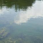 Fish at Green Turtle Bay