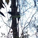 Raccoon at Panther Creek Park