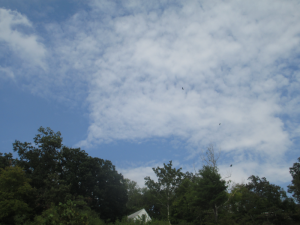 Birds Soaring over Lighthouse Landing