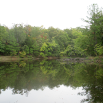 Cedar Pond, Land Between the Lakes
