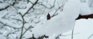Winter Events Kentucky