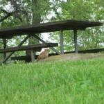 Chipmunk at Lake Cumberland State Resort Park