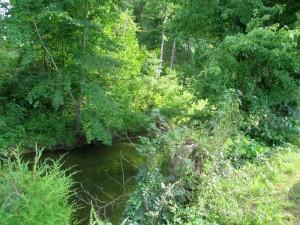 Creek at Pennyrile Forest State Resort Park