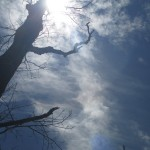 Cool Tree at Pennyrile Forest State Park