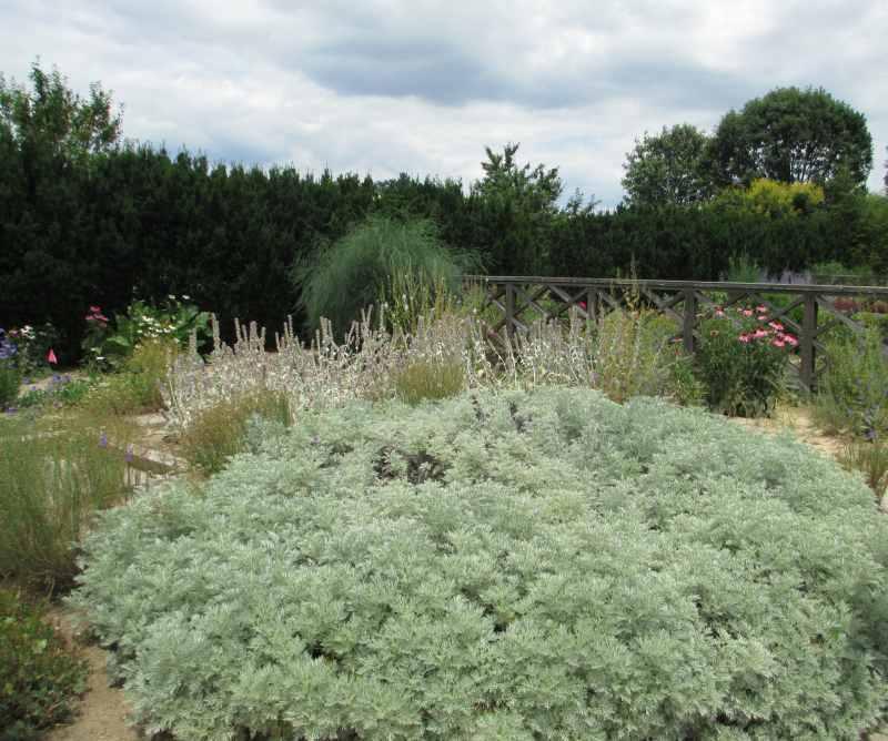 Western Kentucky Botanical Garden Herb Garden