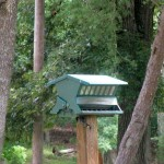 Bird on a Feeder at Pennyrile Forest State Park