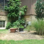 Pennyrile Forest State Park Bird and Squirrel Feeding Station
