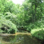 Creek at Pennyrile Forest State Park