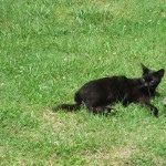 Cat at Western Kentucky Botanical Gardens in Owensboro Kentucky June 2012