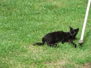 Cat at Western Kentucky Botanical Gardens in Owensboro Kentucky June 2012