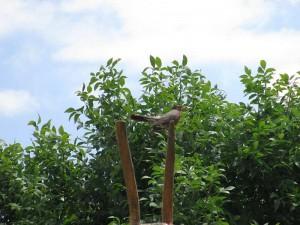 Robin at the Western Kentucky Botanical Garden