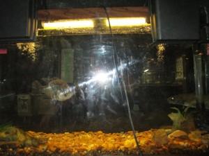 Fish Tank in the Lake Barkley Lodge