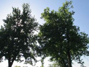 Trees at Lake Barkley State Resort Park