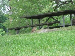 Chipmunk near a picnic area, Lake Cumberland State Resort Park
