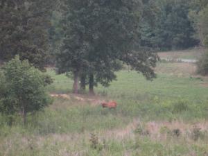 Elk in Kentucky