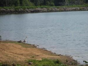 Loch Mary in Earlington, Kentucky