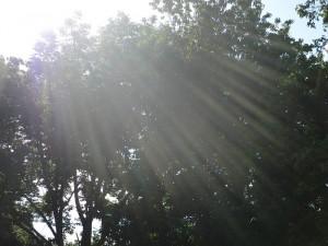 Sun Shining Through Kentucky Trees