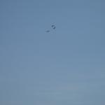 Birds over Rough River Lake