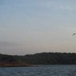 Rough River Lake Osprey