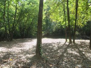 Autumn at Panther Creek Park