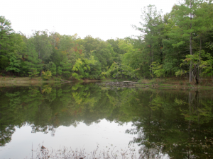 Cedar Pond Picnic Area, Land Between the Lakes