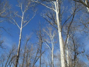 Trees at Panther Creek Park