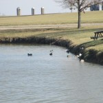Ducks at Panther Creek Park, Owensboro