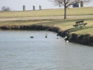 Ducks at Panther Creek Park, Owensboro