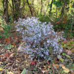 Panther Creek Park Plant