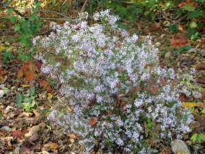 Panther Creek Park Plant in Autumn