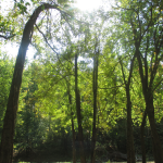 Panther Creek Park Trees