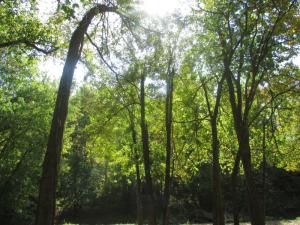 Panther Creek Park Trees