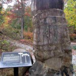 Pine Mountain State Resort Park Fossil Tree