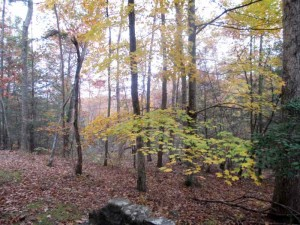 Pine Mountain Woods behind the Lodge