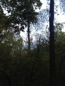 Raccoon Panther Creek Park, Ownensboro
