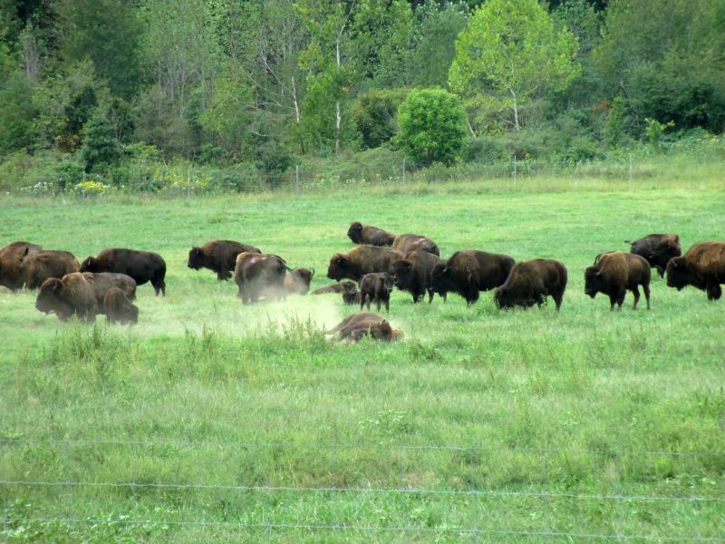 Bison Prairie - Land Between the Lakes