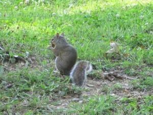 Squirrel at Rough River Dam State Resort Park