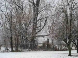 Snowy Morning Dec. 2012