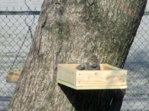Squirrels Gone Wild 2013