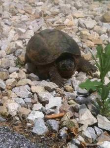 Brittany's Turtle, Jack C. Fisher Park (Owensboro)