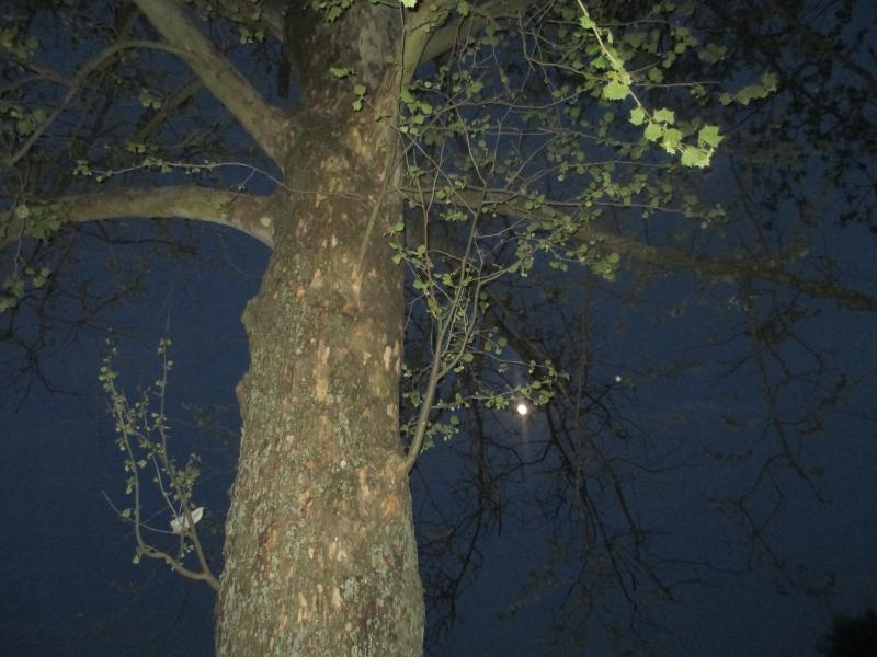Full Moon through a favorite tree.
