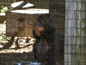 Woodlands Nature Station Groundhog