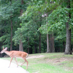 Deer at Carter Caves State Resort Park