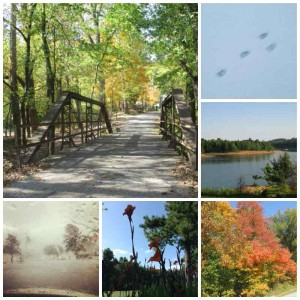 Kentucky Seasons Collage