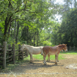 The Homeplace Horses