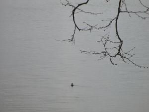 Lake Barkley at Green Turtle Bay
